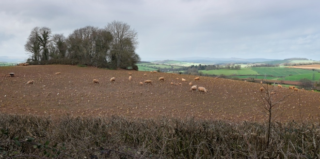 The moor in the distance, from Ipplepen