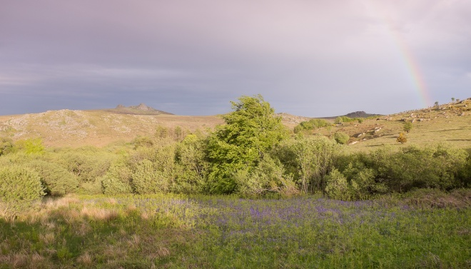 Holwell Lawn, Hay Tor and rainbow