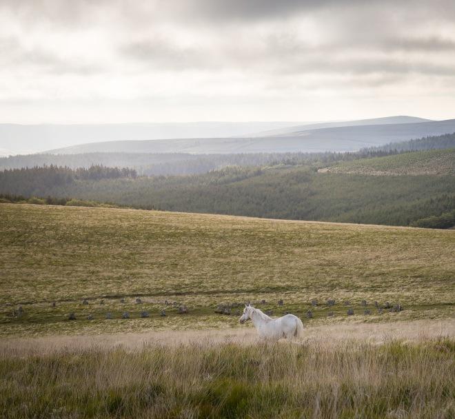 White pony above Grey Wethers