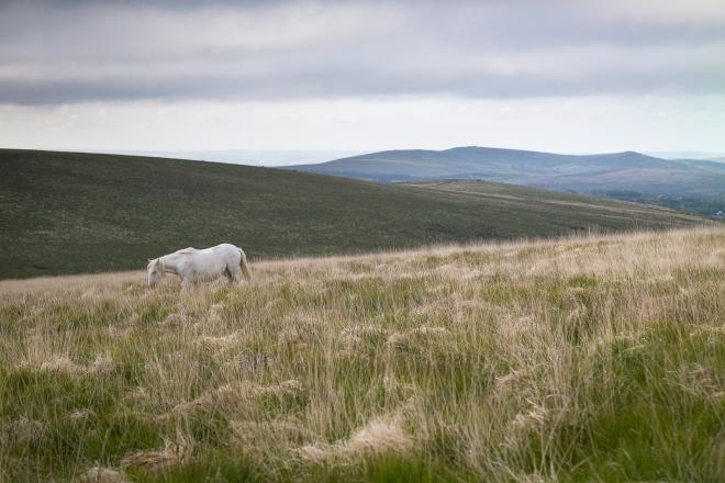 White Pony Sittaford